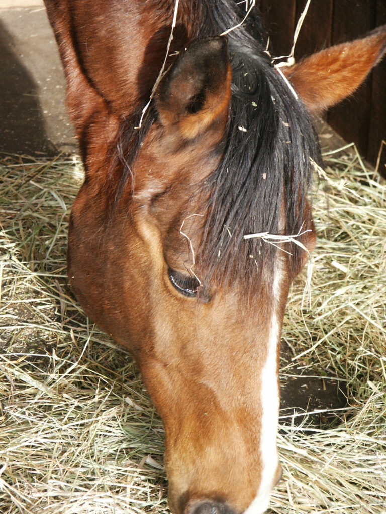 Virksomhed tilbyder billigt hestefoder