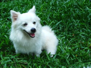Oliver's hundefoder til din bedste ven